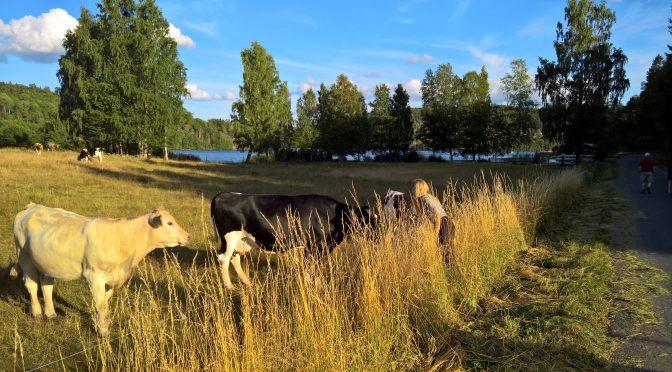 Det Svenske sommerland