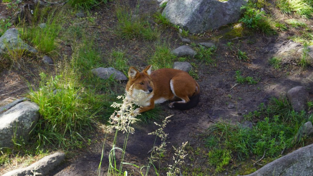 Ranua wildlife park