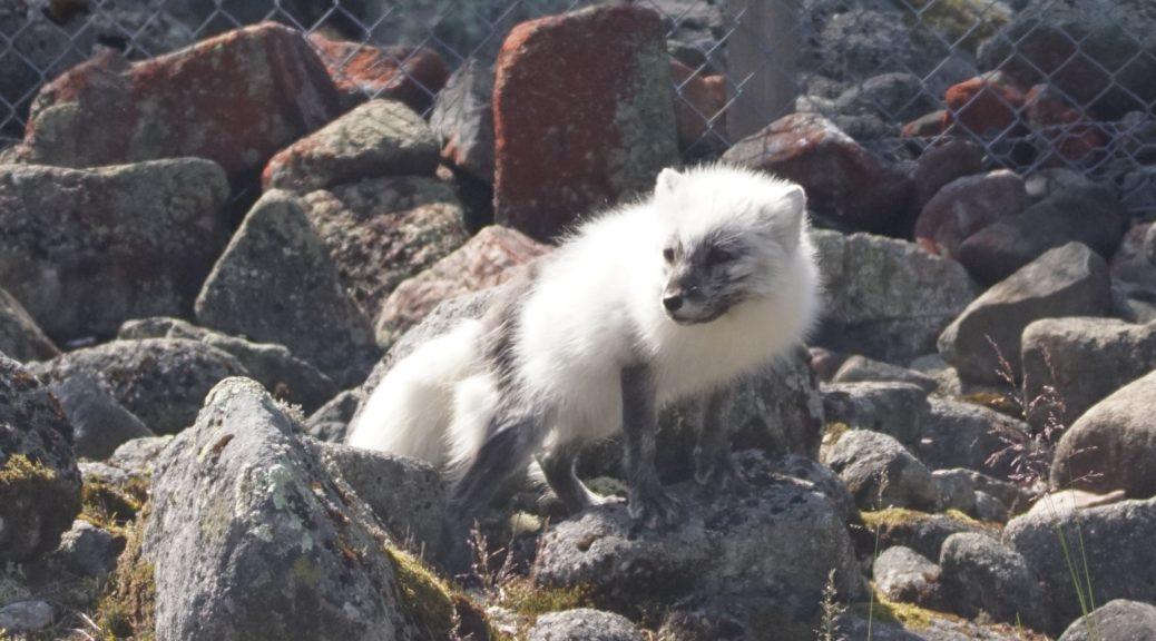 Wildlife i Finland